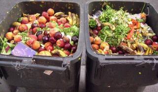 دنیا میں لوگ سالانہ 1 ارب ٹن کھانا ضائع کرتے ہیں