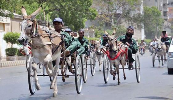جیکب آباد میں گدھا گاڑی چلانے والوں کی تعداد میں اضافہ