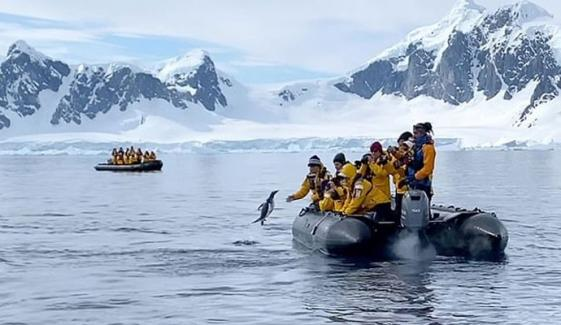 پینگوئن کے پیچھے کِلر وہیلز پڑ گئیں، سیاحوں نے جان بچالی