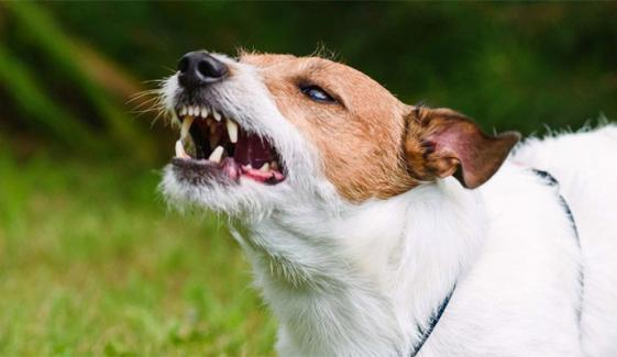 کتوں کے کاٹنے پر علاقہ مکین ایڈمنسٹریٹر کراچی کے خلاف مقدمہ درج کروانے پہنچ گئے