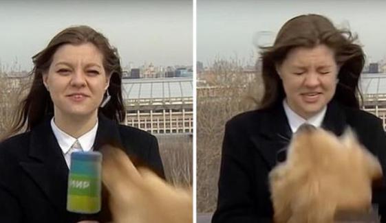 لائیو رپورٹنگ کے دوران کتا خاتون رپورٹر سے مائیک چھین کر فرار