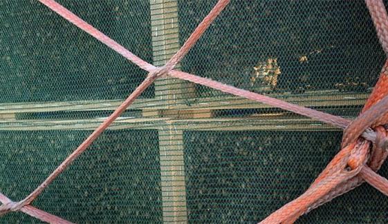چائنا ایئرلائن کی پرواز پر شہد کی ہزاروں مکھیوں کا خصوصی سفر