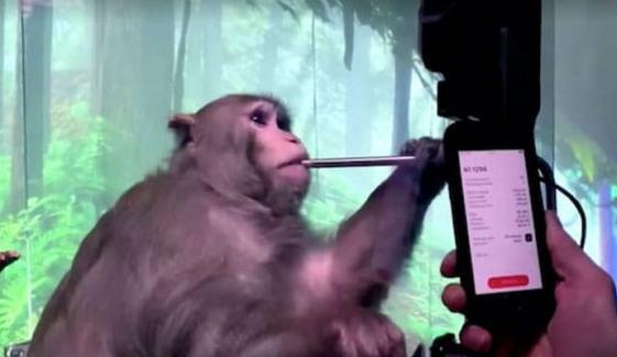 امریکی کمپنی نے بندر کے دماغ میں الیکٹرونک چپ لگادی