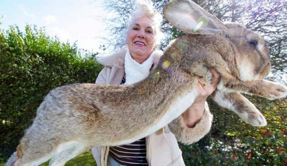 دنیا کا سب سے لمبا خرگوش چوری ہو گیا