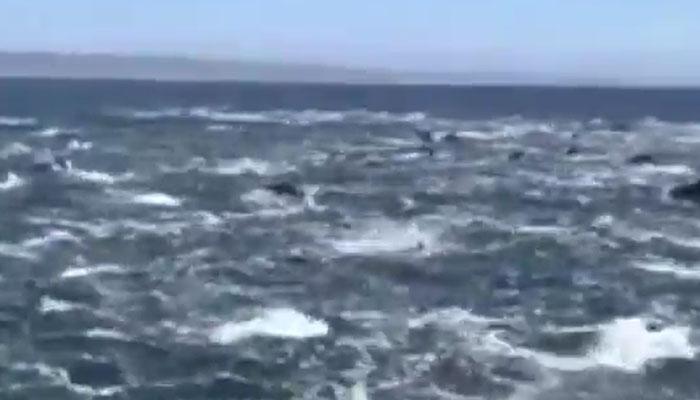 دیہاتیوں نے ڈولفن کو خطرناک جانور سمجھ کر ماردیا