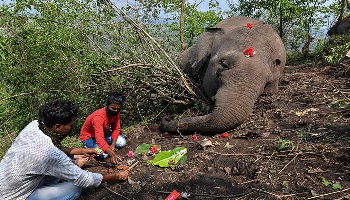 بھارتی ریاست آسام میں 18 ہاتھی مردہ حالت میں پائے گئے