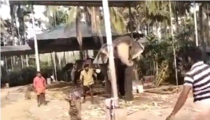 ہاتھی کی کرکٹ کھیلنے کی ویڈیو سوشل میڈیا پروائرل