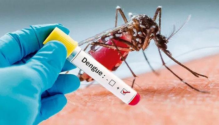 Successful experiment in reducing dengue cases
