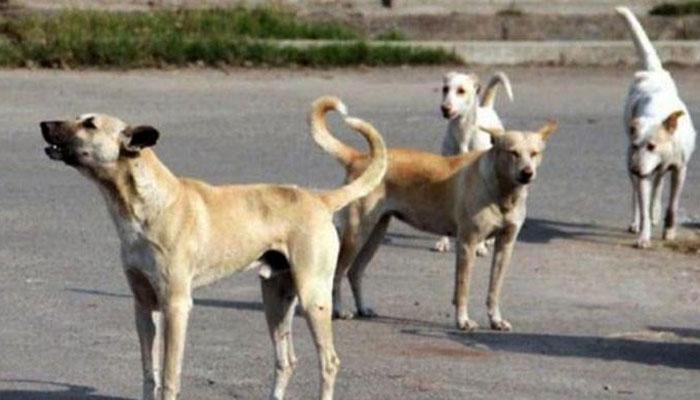 جامشورو: بھریا ویلیج میں پاگل کتے نے 17 بچوں کو کاٹ کر زخمی کردیا