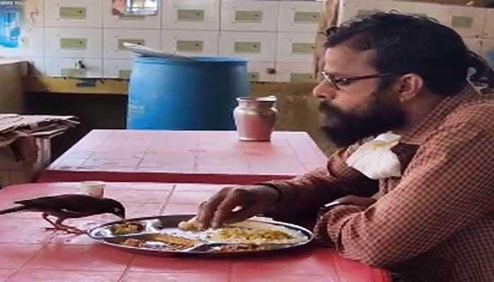 چڑیا اور انسان کی ایک ہی پلیٹ میں کھانا کھانے کی ویڈیو وائرل