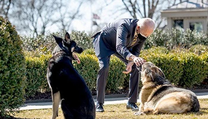 پالتو کتے کے مرنے سے جوبائیڈن غم میں مبتلا
