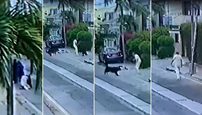 وکیل پر کتوں کا حملہ، مالک کی ضمانت میں مزید توسیع
