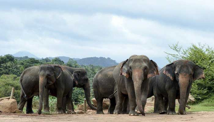 بھارت میں بدمست ہاتھی نے 16 دیہاتیوں کو ہلاک کردیا