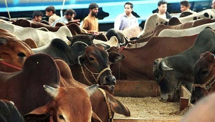 پنجاب کی مویشی منڈیوں کانیلام عام
