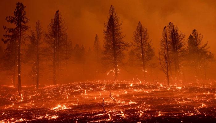 کیلیفورنیا اور اوریگن کے جنگلات کی آگ نے شدت اختیارکرلی