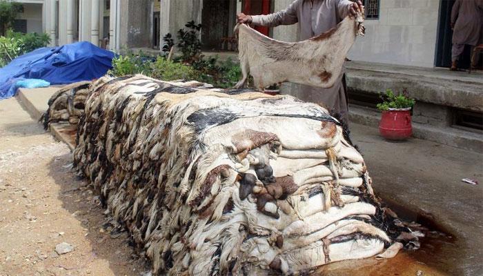پنجاب: 85 کالعدم تنظیموں پر کھالیں جمع کرنے پر پابندی