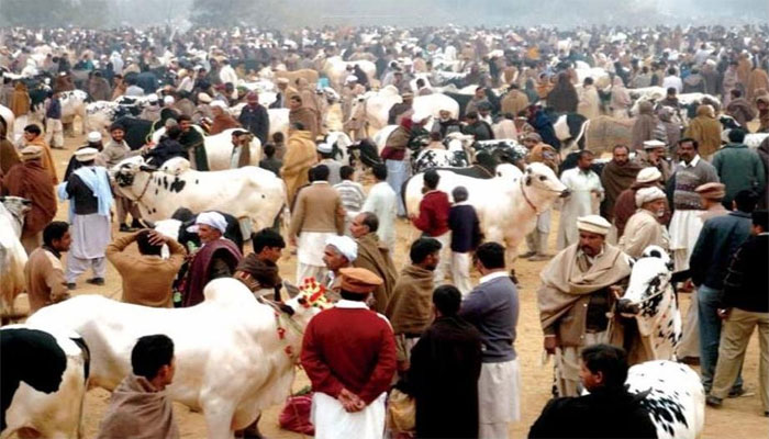 مویشی منڈیوں کی رونقیں اور دام عروج پر