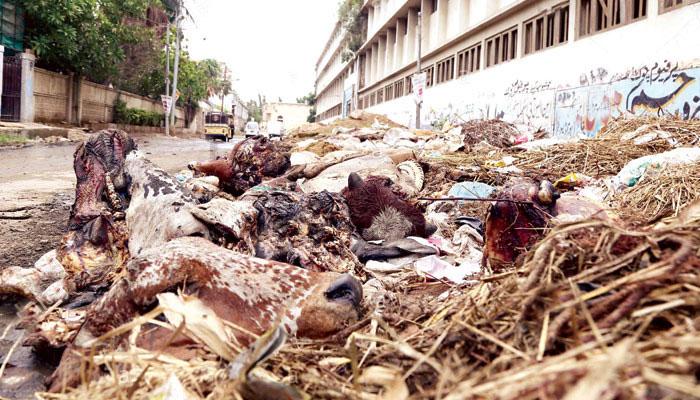کراچی: آلائشیں اٹھانے کا انتظام سندھ سولڈ ویسٹ مینجمنٹ کے سپرد
