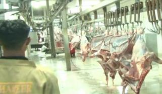 بچھیا ذبح کرنے سے گوشت بننے میں صرف 12 منٹ