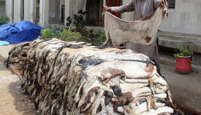 ملک میں 20 سے 22 لاکھ گائے اور 55 سے 60 لاکھ بکرے و دنبے ذبح کیے گئے، ٹینریز ایسوسی ایشن