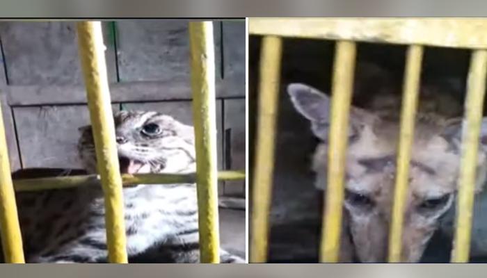 کراچی، سرکس میں رکھے گئے نایاب جنگلی جانور برآمد