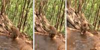 بندریا کی اپنے بچے کو نہلانے کی ویڈیو وائرل