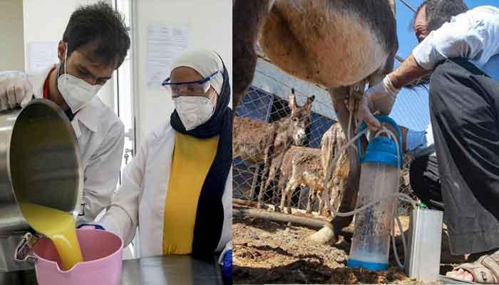 اردن، گدھی کے دودھ سے بنے صابن کی مانگ میں اضافہ