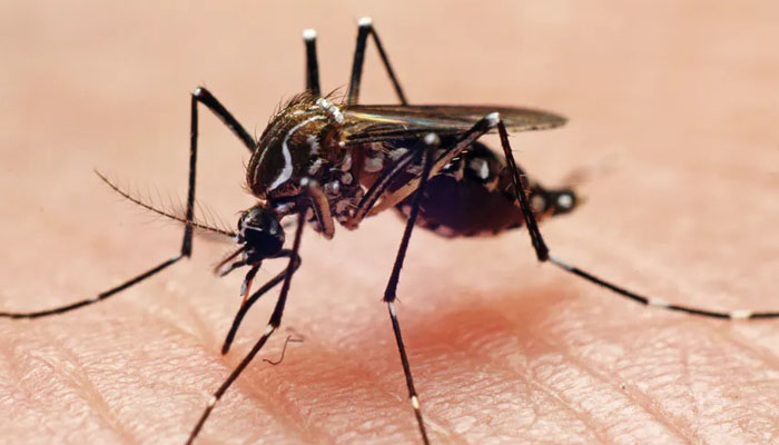 مچھروں کو دور رکھنے اور ڈینگی سے بچنے کے موثر طریقے