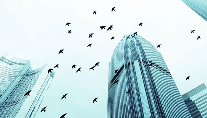 نیویارک: ہجرت کرنیوالے پرندے کیسے مرتے ہیں؟