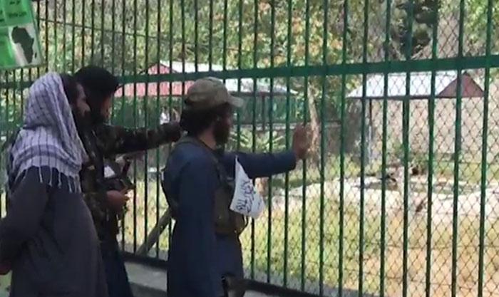 کابل؛ چِڑیا گھر میں طالبان کا رش، سیر و تفریح سے لطف اندوز