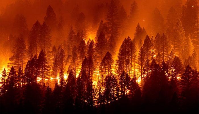 جنوبی کیلیفورنیا کے جنگلات میں لگی آگ بے قابو، 13 ہزار ایکڑ رقبہ جل کر راکھ